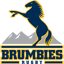 Brumbies Rugby logo