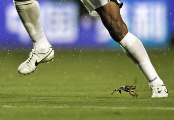 MIAMI GARDENS, FL - OCTOBER 08:  A Bull Frog hops around on the field as Carlos Costly #13 of Honduras brings the ball up in the rain against the USA at Sun Life Stadium on October 8, 2011 in Miami Gardens, Florida.  (Photo by Marc Serota/Getty Images)