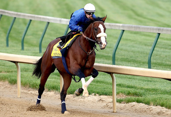 LOUISVILLE, KY - APRIL 28:  Union Rags is riden by Julien Laparoux during the morning excercise session in preparation for the 138th Kentucky Derby at Churchill Downs on April 28, 2012 in Louisville, Kentucky.  (Photo by Matthew Stockman/Getty Images)