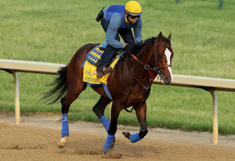 LOUISVILLE, KY - MAY 03:  Bodemeister trains in preparation for the 138th Kentucky Derby at Churchill Downs on May 3, 2012 in Louisville, Kentucky.  (Photo by Elsa/Getty Images)