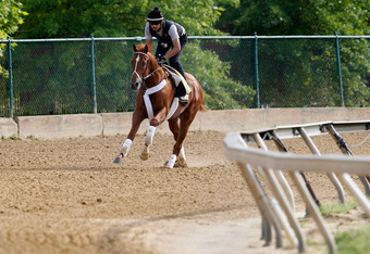 BALTIMORE, MD - MAY 16:  Exercise rider Jonny Garcia takes I'll Have Another over the track in preparation for the 137th Preakness Stakes at Pimlico Race Course on May 16, 2012 in Baltimore, Maryland.  (Photo by Rob Carr/Getty Images)