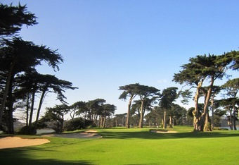 Majestic Monterey Cypress trees of Harding Park. Site of 2010 & 2011 Charles Scwab Cup Championship, the Grand Finale of the Champions Tour.