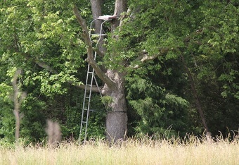 "Setting up a tree stand near a ""kill plot"" could increase your chances of success during hunting season"