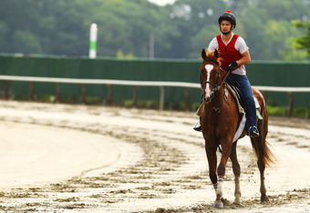 ELMONT, NY - JUNE 02:  Dullahan ridden by exercise rider Faustino Aguilar walks the track during a morning workout at Belmont Park on June 2, 2012 in Elmont, New York.  (Photo by Al Bello/Getty Images)