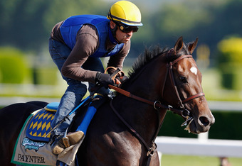ELMONT, NY - JUNE 07: Paynter trains on the track in preparation for the 144th Belmont Stakes at Belmont Park on June 7, 2012 in Elmont, New York.  (Photo by Rob Carr/Getty Images)