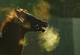 ELMONT, NY - JUNE 06:  A horse leaves the track after a morning workout at Belmont Park on June 6, 2012 in Elmont, New York.  (Photo by Al Bello/Getty Images)