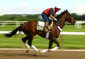 ELMONT, NY - JUNE 05:  Atigun gallops during a morning workout at Belmont Park on June 5, 2012 in Elmont, New York.  (Photo by Al Bello/Getty Images)