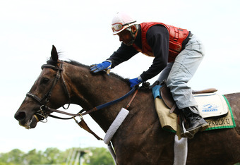 ELMONT, NY - JUNE 05:  Unstoppable U gallops during a morning workout at Belmont Park on June 5, 2012 in Elmont, New York.  (Photo by Al Bello/Getty Images)