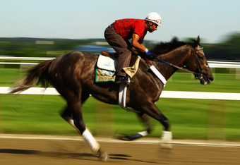 ELMONT, NY - JUNE 07:  Unstoppable U gallops during a morning workout at Belmont Park on June 7, 2012 in Elmont, New York.  (Photo by Al Bello/Getty Images)