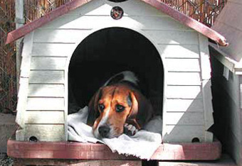 Inthedoghouse_crop_340x234