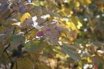 November22008002_crop_150x100