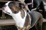 Dog_crop_150x100
