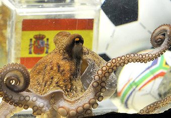 Alg_octopus-paul_crop_340x234