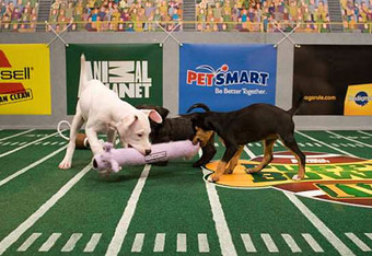 Puppybowl_crop_340x234