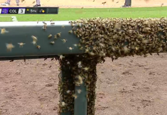 MLB Game Interrupted by Bee Swarm