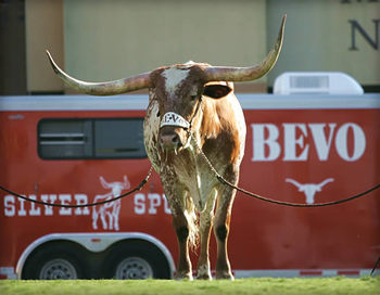 Bevo_display_image