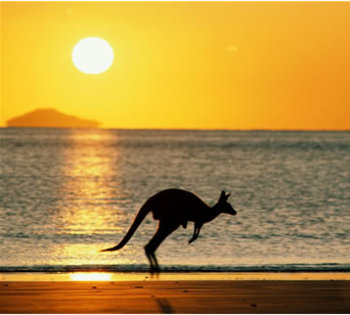 Australiakangaroo_display_image