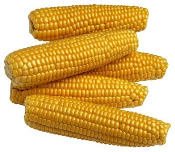 Corn_display_image