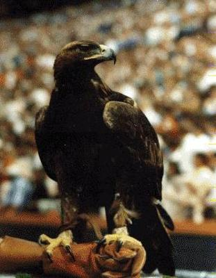 Auburn_war_eagle_display_image