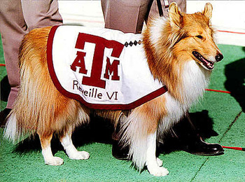 Reveille122209_display_image