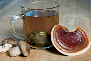 Medicinal_mushroom_tea_display_image