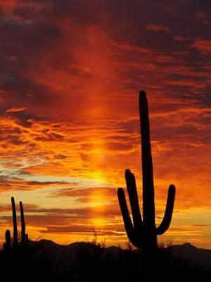 Tucsonsunset_display_image