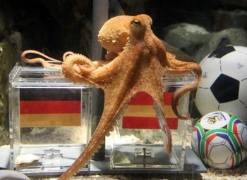 Octupus_picks_spain_display_image