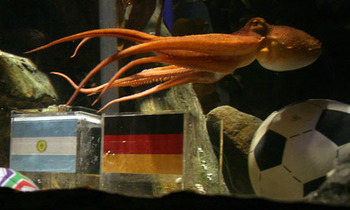 Paul-the-octopus-006_display_image