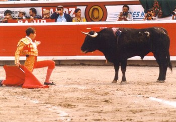 Bullfighting11_display_image