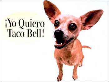 Taco-bell-dog_display_image