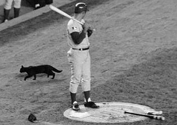 The Black Cat Incident At Shea Stadium