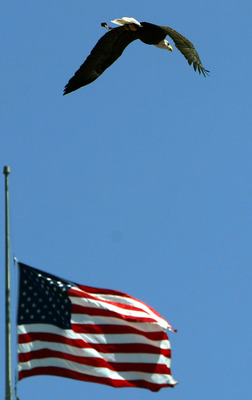 An Eagle Soars Over The American Flag