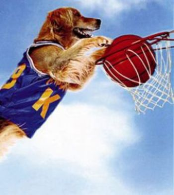 Airbud_display_image