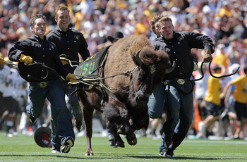 DENVER - SEPTEMBER 04:  Ralphies Runners flank Ralphie V as he escorts the Colorado Buffaloes onto the field to face the Colorado State Rams during the the Rocky Mountain Showdown at INVESCO Field at Mile High on September 4, 2010 in Denver, Colorado.  (P