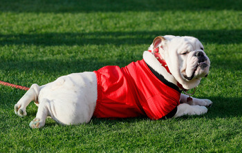 AUBURN, AL - NOVEMBER 13:  UGA VIII, mascot of the Georgia Bulldogs, against the Auburn Tigers at Jordan-Hare Stadium on November 13, 2010 in Auburn, Alabama.  (Photo by Kevin C. Cox/Getty Images)