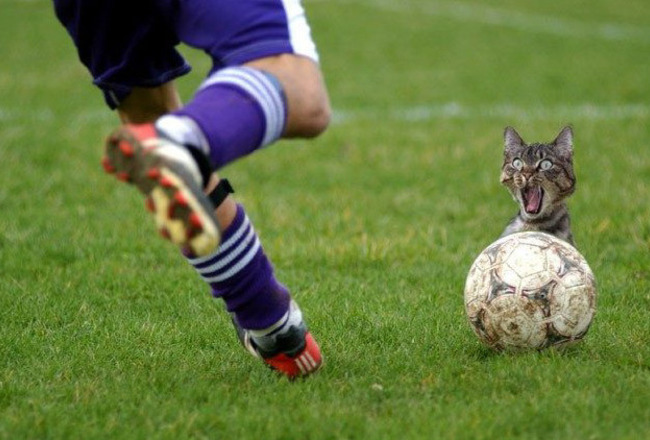 Funny_cat_soccer_problem_crop_650x440