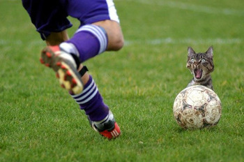Funny_cat_soccer_problem_display_image