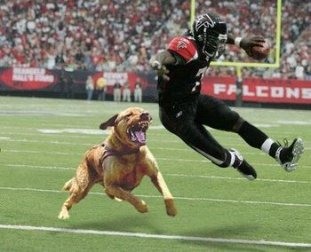 Michael-vick_display_image