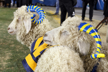 PHILADELPHIA - DECEMBER 11: Two Navy ram mascots stand on the sideline during a game against the Army Black Knights on December 11, 2010 at Lincoln Financial Field in Philadelphia, Pennsylvania. The Midshipmen won 31-17. (Photo by Hunter Martin/Getty Imag