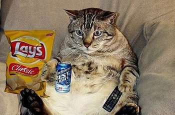 Couchpotatocat_display_image