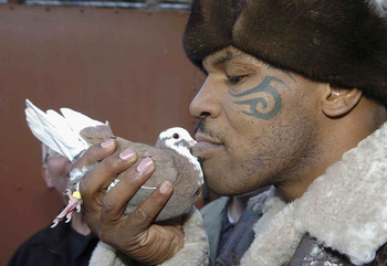 Mike-tyson-pigeon_display_image