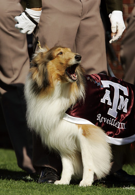 NORMAN, OK - NOVEMBER 12:  Reveille III cheers on the Texas A&M Aggies against the Oklahoma Sooners on November 12, 2005 at Memorial Stadium in Norman, Oklahoma. Oklahoma won 36-30.  (Photo by Brian Bahr/Getty Images)