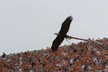 Wareagle_display_image