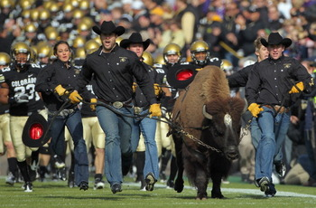 BOULDER, CO - NOVEMBER 20:  Ralphie IV, the mascot for the Colorado Buffaloes, leads coach Brian Cabral (R) and the team onto the field to face the Kansas State Wildcats at Folsom Field on November 20, 2010 in Boulder, Colorado. Colorado defeated Kansas S