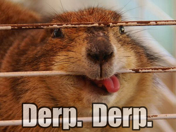 Derp-derp_display_image