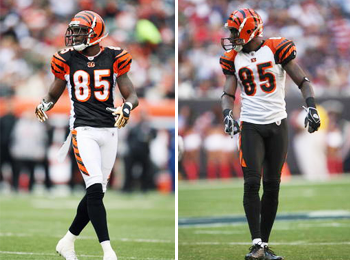 Bengals_display_image