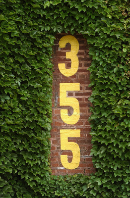CHICAGO - JUNE 15:  A closeup view of the distance number (355 feet from home plate) and ivy covered leftfield wall at Wrigley Field on June 15, 2004 in Chicago, Illinois.  (Photo by Jonathan Daniel/Getty Images)