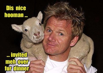 Gordon-ramsay-dis-nice-hooman_display_image
