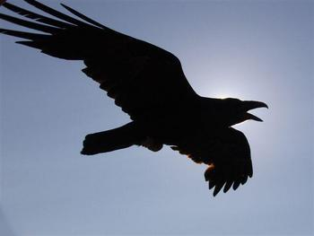 Raven_display_image