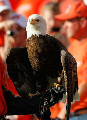AUBURN, AL - NOVEMBER 13:  War Eagle, mascot of the Auburn Tigers, against the Georgia Bulldogs at Jordan-Hare Stadium on November 13, 2010 in Auburn, Alabama.  (Photo by Kevin C. Cox/Getty Images)